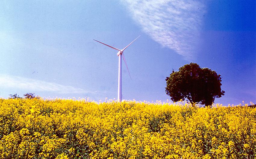 ②:花の中の風車
