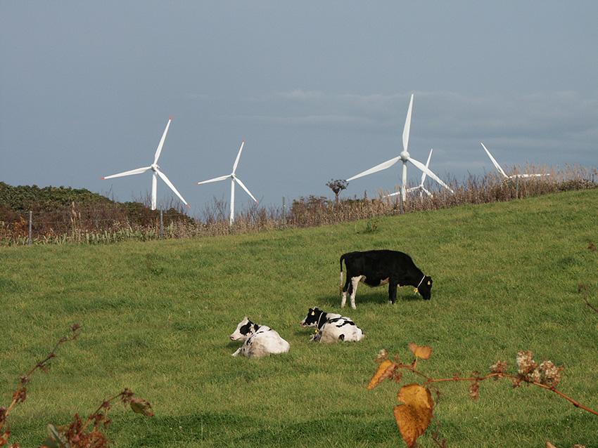 ③:風車とたわむれる放牧牛 中山 貴晴 撮影場所:北海道苫前郡