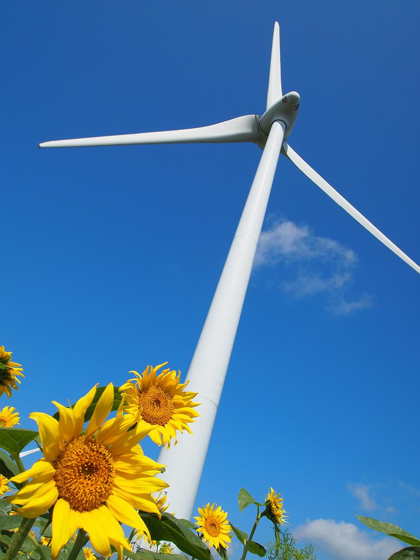 ⑨:真夏の巨塔 甲良 帆風 福島県郡山市・布引高原