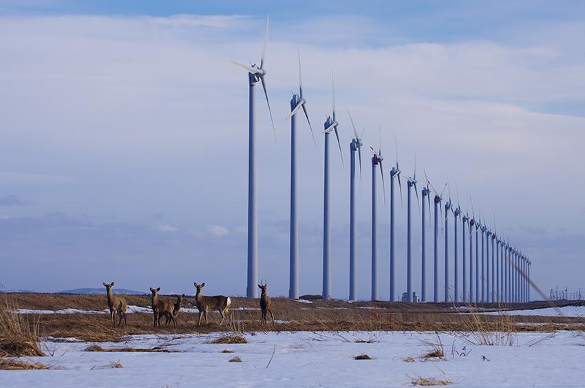 ⑤:風車群と蝦夷鹿 佐藤 圭 撮影場所:北海道天塩町