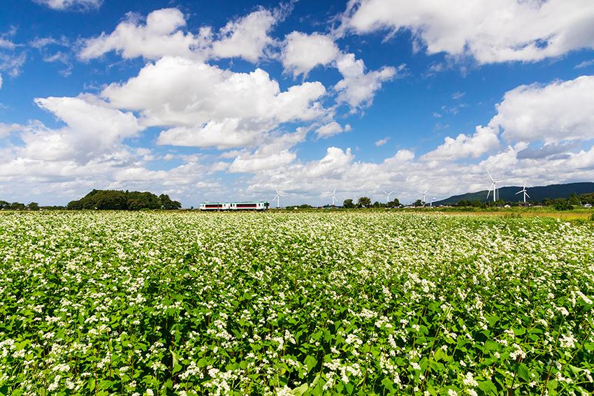 ⑨:そばの花の咲く頃 石崎 幸宏 撮影場所:山形県庄内町
