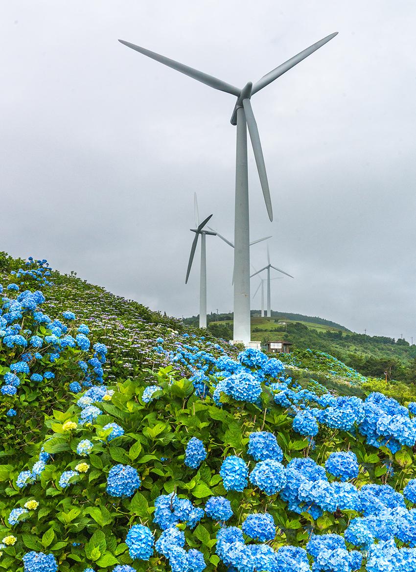 ⑦:花の中でガンバル 村上 翼 撮影場所:徳島県佐那河内村