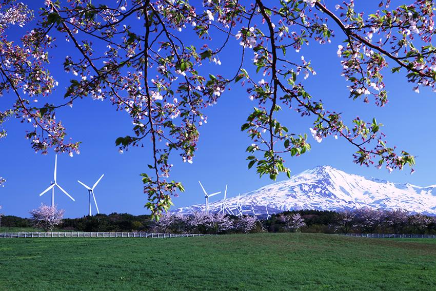 ②:陽春  撮影場所:秋田県由利本荘市