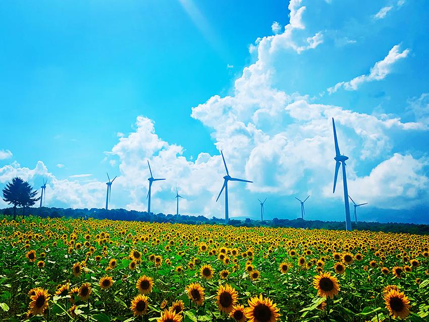 ⑥:風と共に生きよう  撮影場所:福島県郡山市